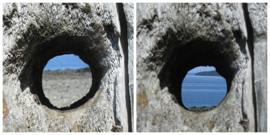 Hole in tree