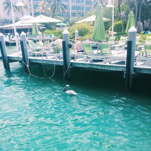 Pelican? at the docks